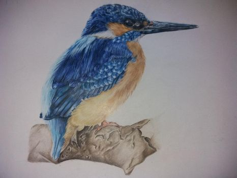 Kingfisher by franni91