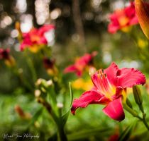 Spring by grimphotography