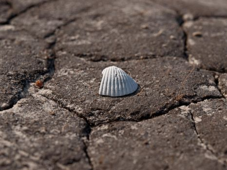 on the rocks: shell 1 by fuego316