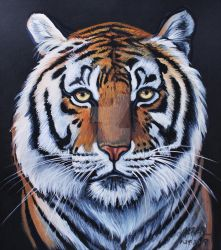 Amber the Turpentine Creek Tiger  by HouseofChabrier
