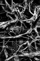 Castramon Woods: roots2 by Coigach