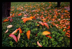 autumn by smrdncr
