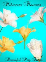 Hibiscus Flowers PNG pack by kayshalady