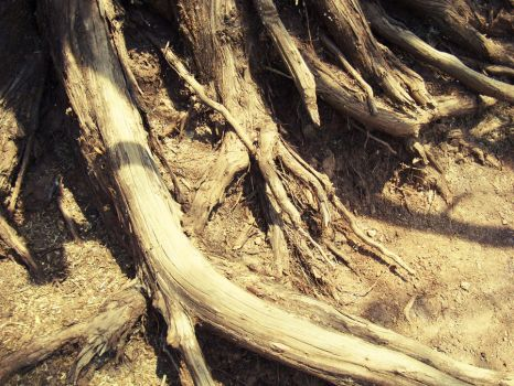 Roots by Superbiaa