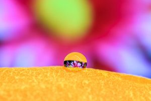 Water drop on a carrot by shpyo