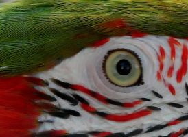 Parrot Eye by nectar666