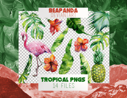 Renders 015 // Tropical Pngs by BEAPANDA