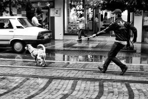 exercise a dog by pigarot