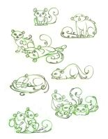 American Curl Kitten character design sketches by snuapril01