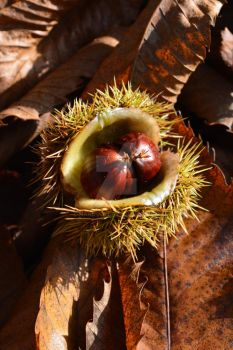 Chestnuts by Nand1na
