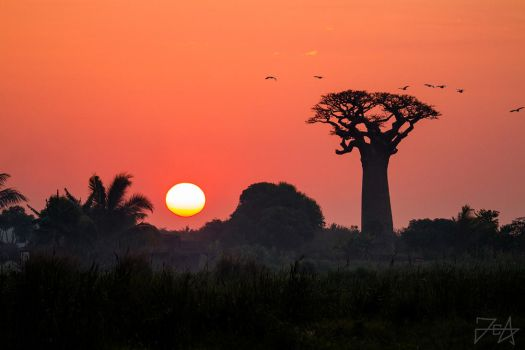 Sunset in Baobab Valley by Azph