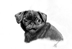 Pug puppy by salt25
