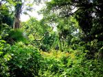 Vibrant Jungle by skyeconnelly