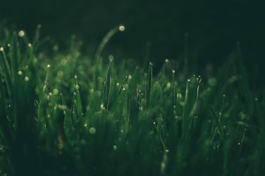 SpringGrass by 1darkstar1