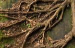 Creeping Roots by scottyboy-72