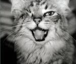 The WINKING CAT - Allison's MEOW!