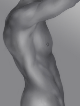 Male Torso Study by ToolOfTheDay