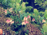 Photogallery 2015 - 23 forest flowers by Ingnition by Ingnition