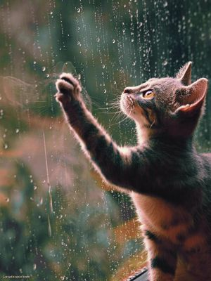[Photography | Fotografia] Rain cat by HitsukiNyan
