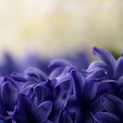 Floral Waves by Pierre-Lagarde