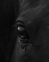 Stock Image III - Horse eye by c-r-4-f-t