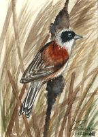 Wind in the reeds (ACEO) by Woodswallow