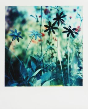 Pola - everlasting flowers by mathildedn
