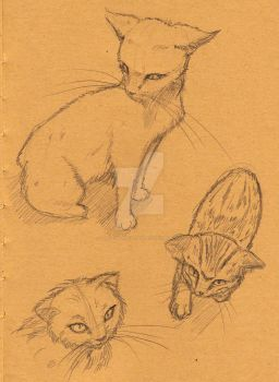 Cat Sketches by lady-storykeeper