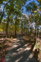 HDR forest by BiOzZ