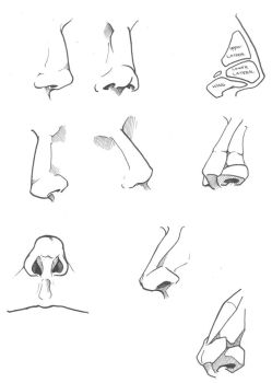Nose Study by Sariel367