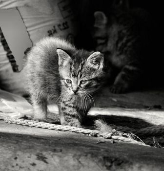 Street Cat by AgresticLamia