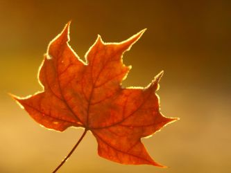 Golden autumn by photo-exile