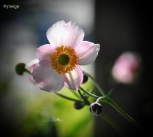 Anemone en transparence by hyneige