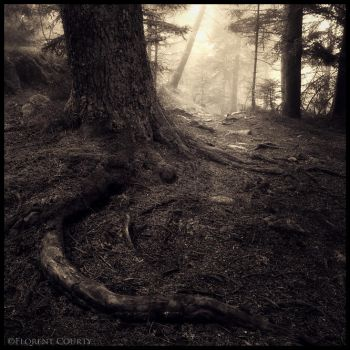 Trail of Chaos by FlorentCourty