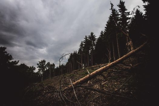 Brander Wald - 3 by chickow