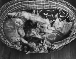 Basket full of trouble by speartime