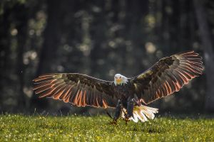 Landing Clearance by Kriloner