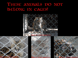 These animals do not belong in cages. by GothicRavenMidnight