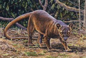 Fossa by WillemSvdMerwe