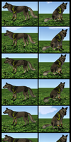 Canine Texture Reference Final by FlyWheel68