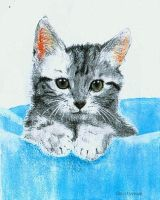 Kitten by genevi