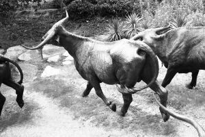 Bull on the run by FT69