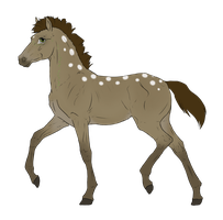 N2838 Padro Foal Design by casinuba