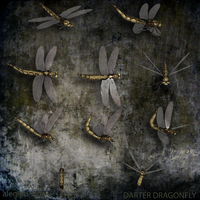 Dragonfly PNG Stock Pack by Alegion-stock
