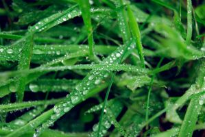 Grass Droplets III by froggypondd