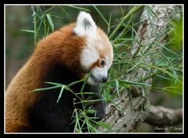 Bamboo Noms by tleach0608