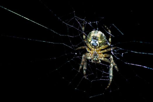 Spiders are Putrid Creatures by Neuk