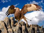 Majestic Griffin by CraigJohn