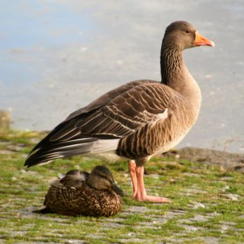 Mother and child - Reykjavik by wildplaces