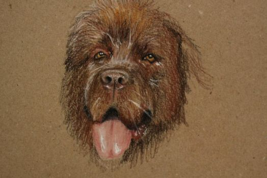 Newfoundland sketch by Jangsara